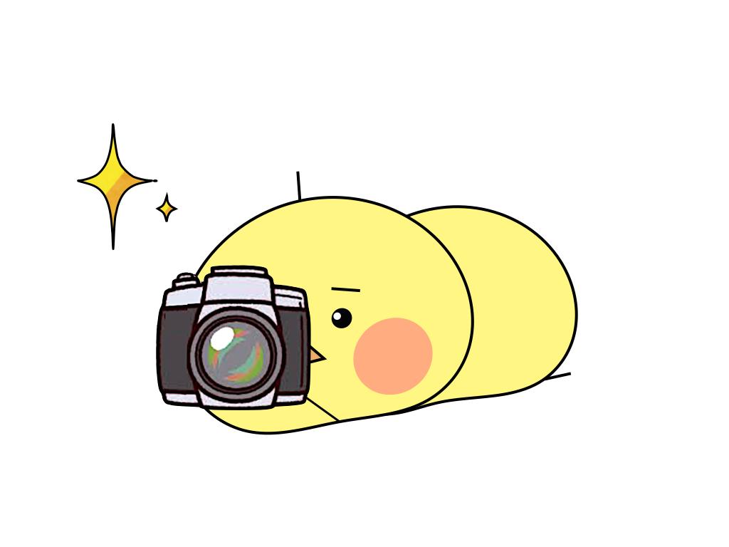 カメラで写真をとるループオン のピヨッチ